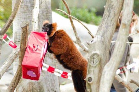 День Святого Валентина в зоопарках мира