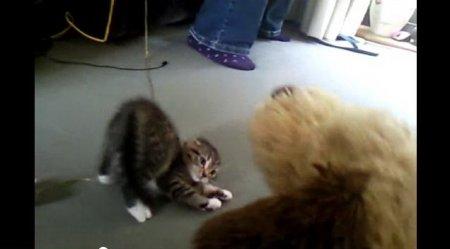 Котенок смело атакует плюшевого щенка