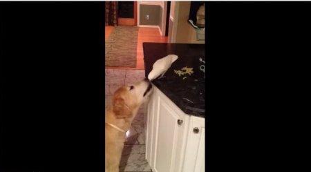 Как попугай собаку кормил