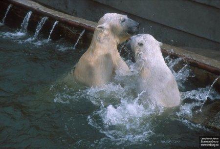 Самая романтическая пара екатеринбургского зоопарка