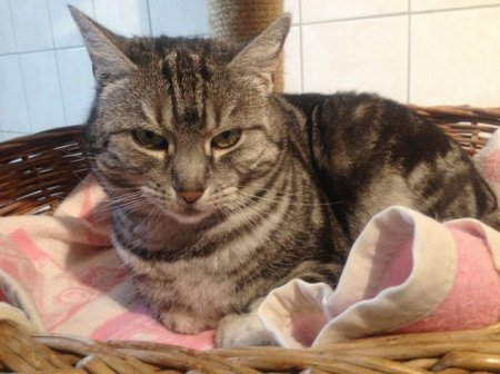 Долговой скандал вокруг двух кошек