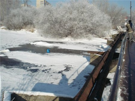 В Екатеринбурге спасли кота, выброшенного в ледяную реку