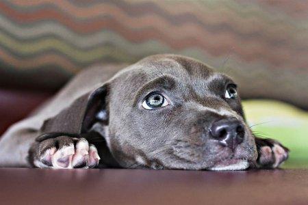 Как любовь и плавание спасли щенка Харпера