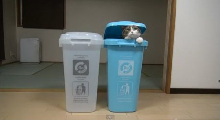 Кот Мару и мусорки