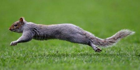Белка выскочила на поле во время футбольного матча