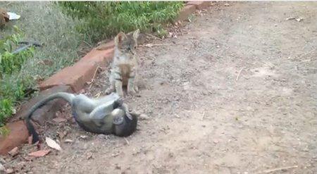 Котёнок и обезьянка - забавная парочка