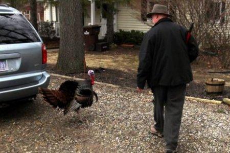 Индейка Годзилла пугает пенсионеров пригорода Детройта