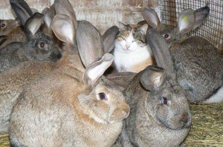 Кошка Люська и кролики