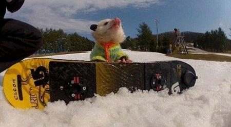 Новая звезда Интернета - сноубордист Рататуй!