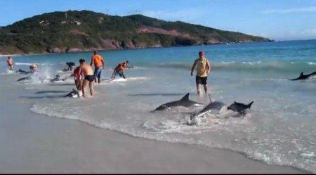В Бразилии спасено около 30 дельфинов