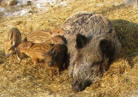 Лучшая мама красноярского зоопарка «Роев ручей»