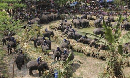 Национальный день слонов в Таиланде
