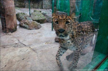 Обитатели ялтинского зоопарка