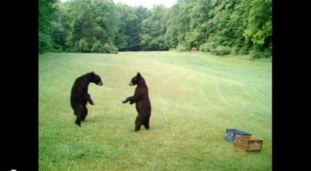 Медвежата сумоисты