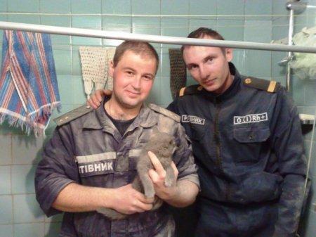 Спасение котенка, упавшего с шестого этажа