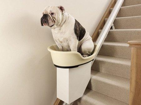 В Великобритании создали подъемник для толстых собак