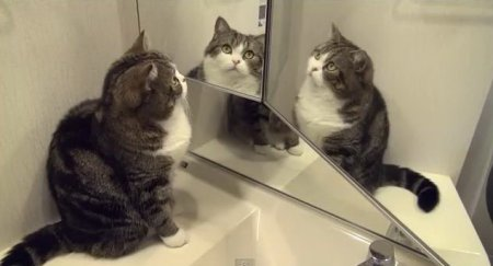 Кот Мару и зеркало