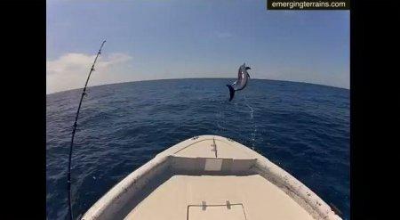 Необычные трюки дельфинов