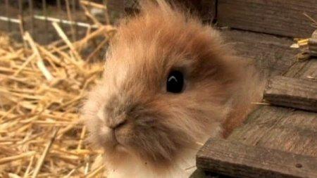Безухий кролик Пиноккио