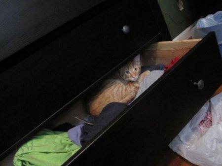 Кошки играют в прятки