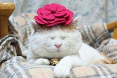 Самый ленивый и модный кот в мире