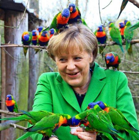 Попугаи подправили прическу Ангелы Меркель