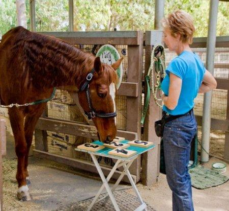 Самый умный конь