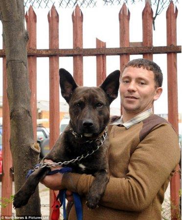 Пес спас маленького мальчика
