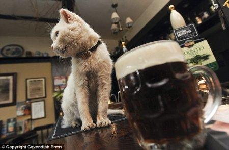 Самая старая кошка Великобритании любит пиво