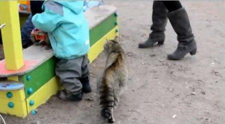 Кошка, фас!