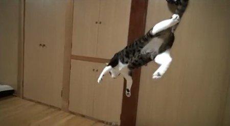 Невероятные кошачьи трюки