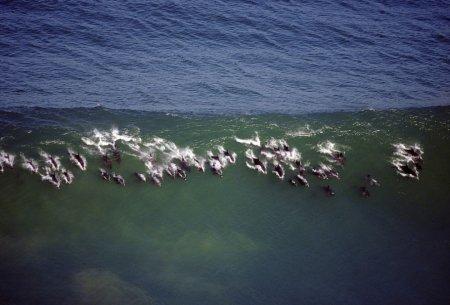 Танцующие дельфины