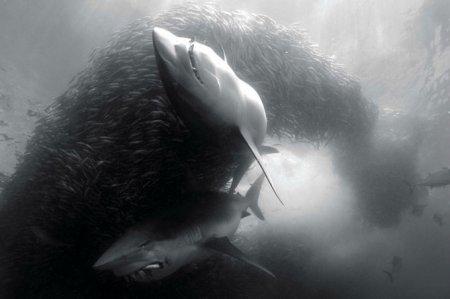 Удивительные снимки подводных обитателей