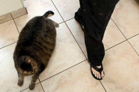 Толстого кота подобрали на улице в Техасе