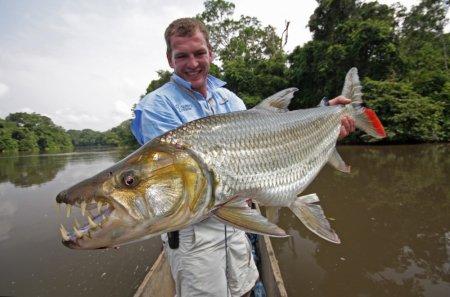 Монстр из Африки – Тигровая рыба Голиаф
