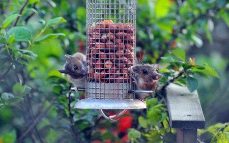 Фото дня: Разочарованные мыши