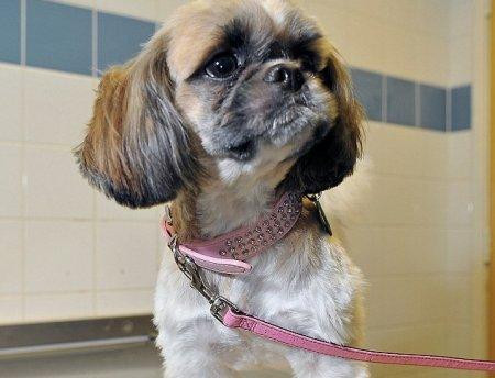 Ветеринары спасли собаку, проглотившую иголку с ниткой