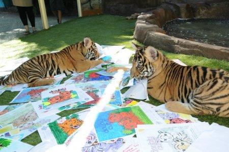 Два тигренка выбрали эмблему сообщества зоопарка