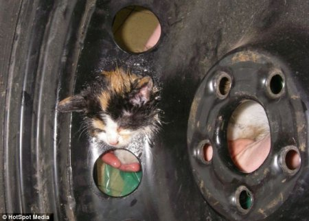 В Бирмингеме спасли застрявшего в колесе котенка