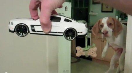 Пес и печенька
