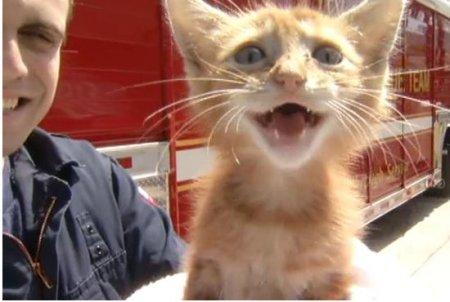 Пожарные спасли котенка из ливневого колодца