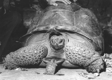 Ретро-фотографии животных
