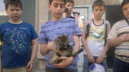 Школьники собирали деньги на операцию котенку