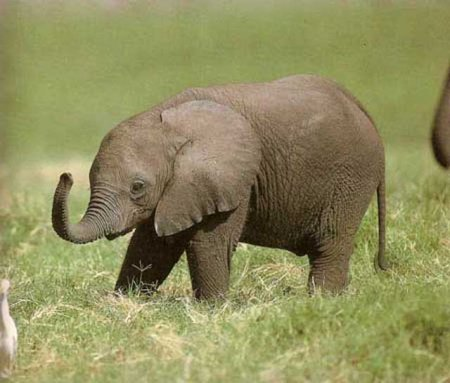 Трогательные маленькие слонята