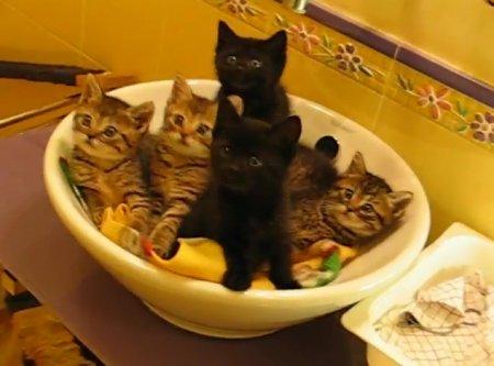Минутка для умиления: Синхронные котята