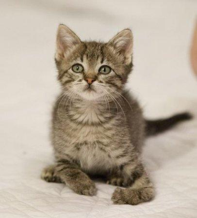Котенка с искривлением лап попытаются вылечить