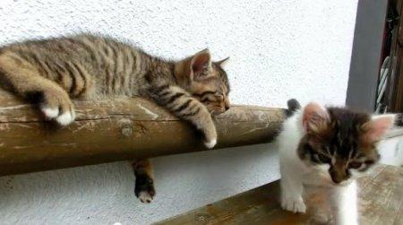 Котенок - лежебока