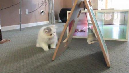 Минутка для умиления: Котенок Марши и новая игрушка