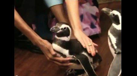 Казус с участием пингвина на ТВ-шоу