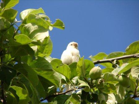 В Белоруссии был сфотографирован белый воробей